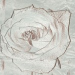 Rose Silver Background